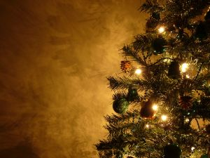 1115633_grahams_christmas_tree_13