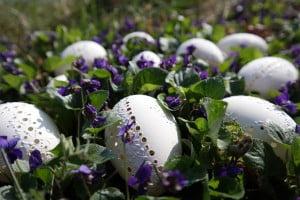 easter-eggs-629696_640