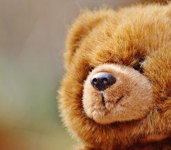 bear-1236251_1920
