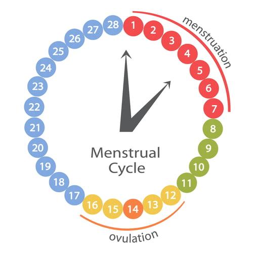 zwanger worden cyclus