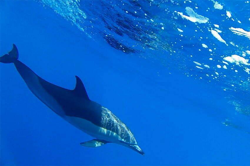 Mar Dourado - Dolfijnen
