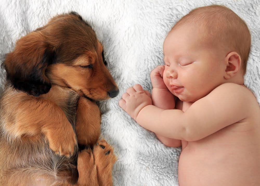 honden en zwangerschap