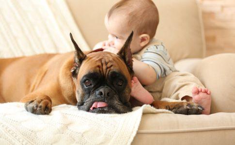 kind en huisdieren