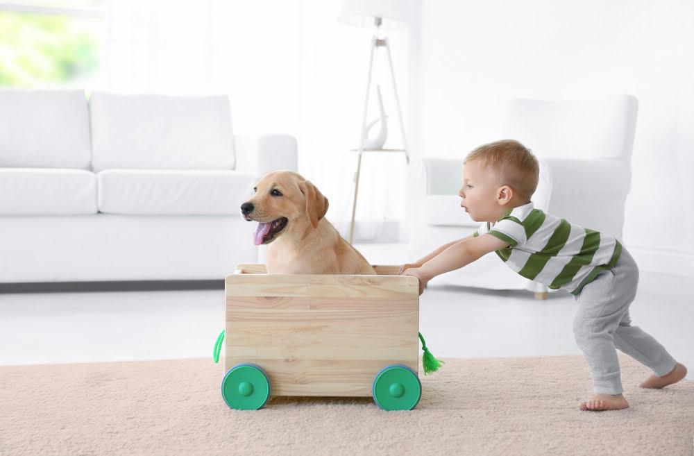 honden en baby